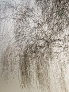 ARS-Fotografie Leica Birkenzweige
